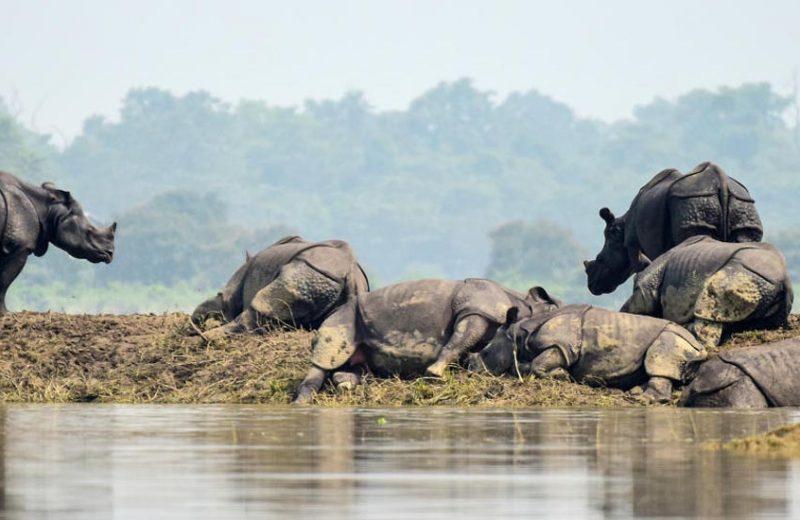 Kaziranga_national_park